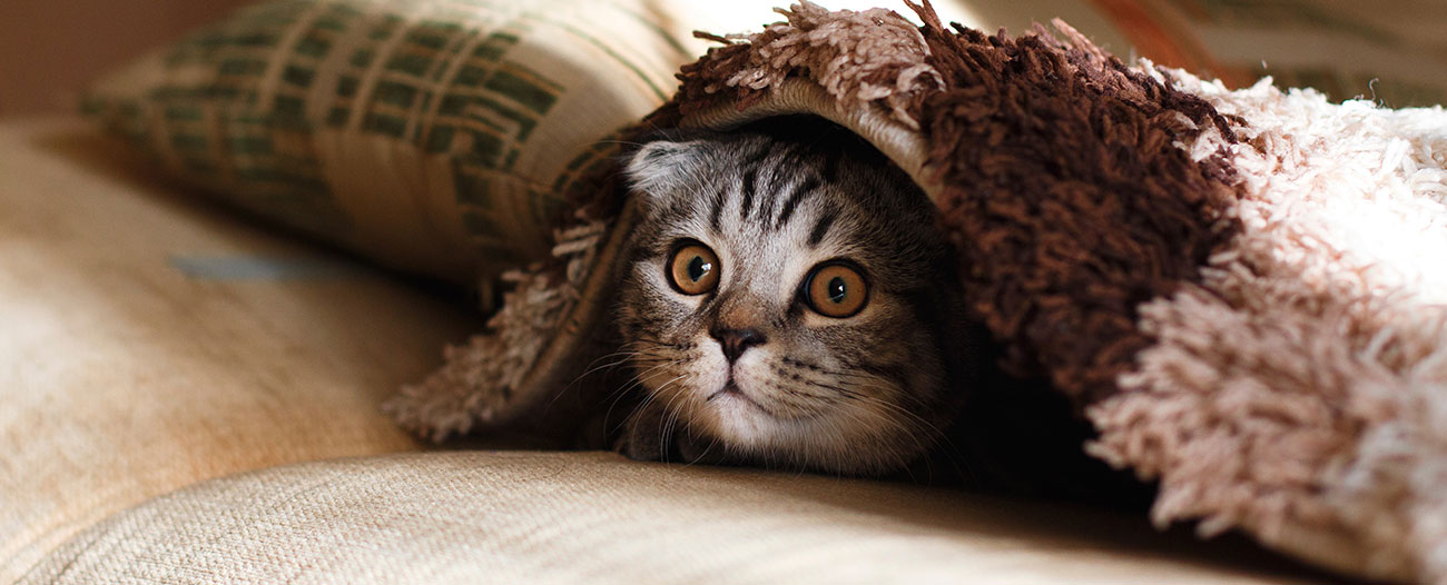 A Guide to Cat Anxiety | TrustedHousesitters com