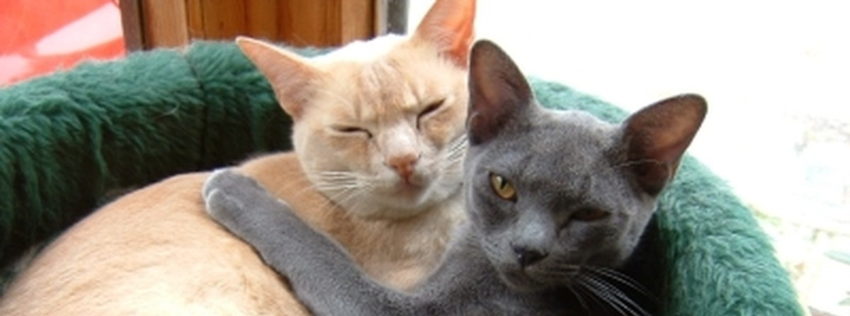 Two cats cuddling up at home.