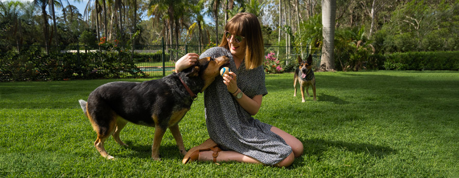Young woman playing with Australian Kelpie dogs on lawn