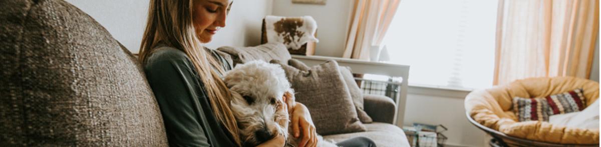 Dog sitting on sofa with female