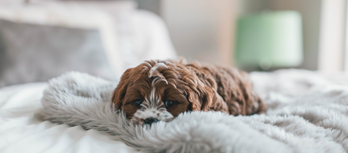 Identify & treat separation anxiety in dogs