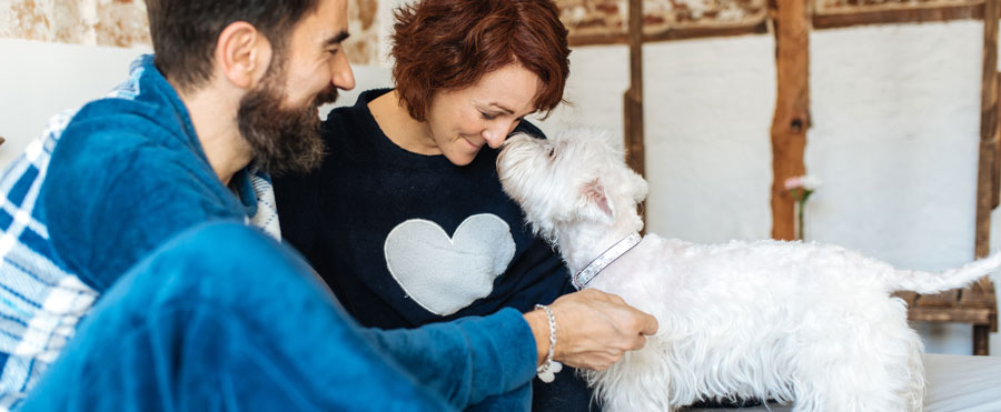 West Highland White Terrier touching noses with couple