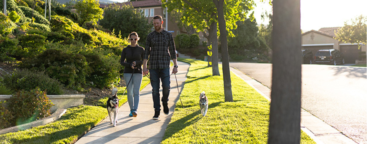 Dog sitters walking in California.